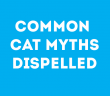 common-cat-myths-dispelled-feature