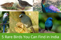 5-Rare-Birds-You-Can-Find-In-India-And-Where-You-Can-Spot-Them