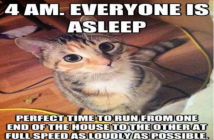 cat-owners-rest