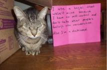 naughty-cat1